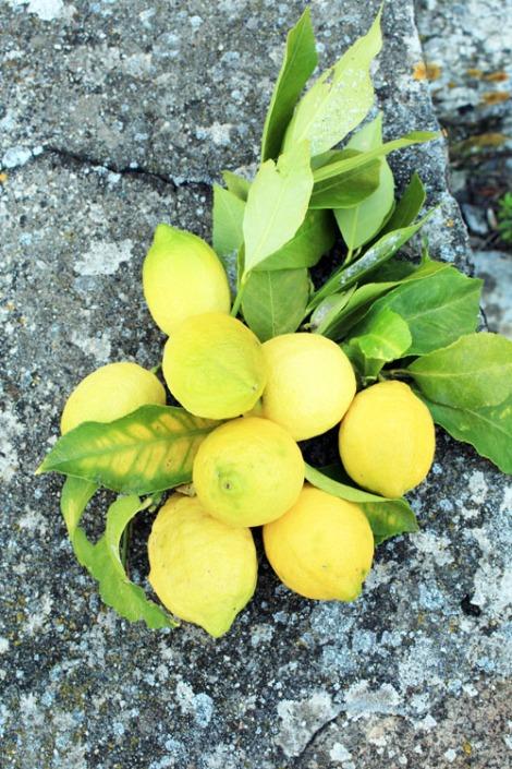 limoni-pasticcini